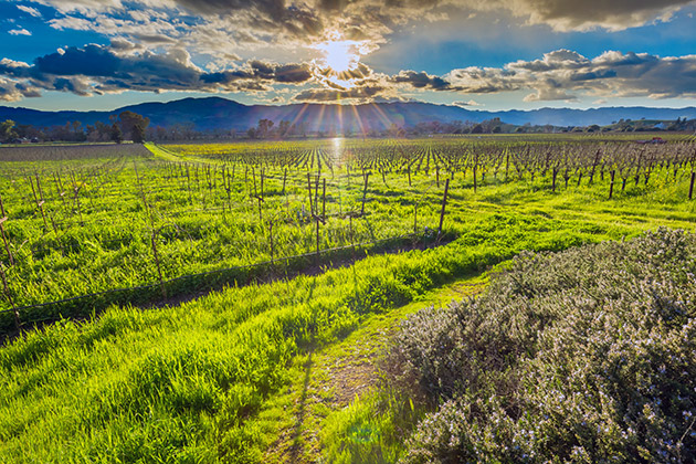 American Canyon CA Community Information by HomeSwing Real Estate